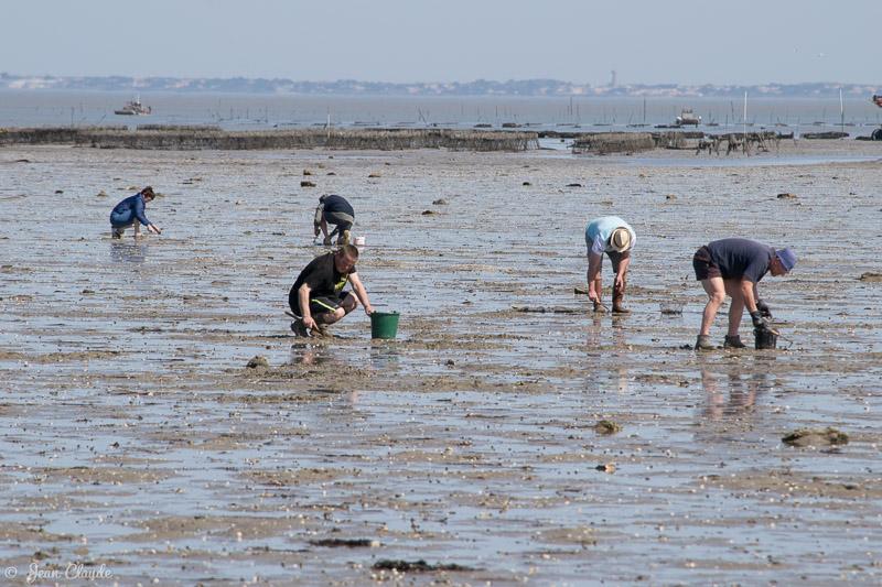 Pêche à pied à Noirmoutier (avril)